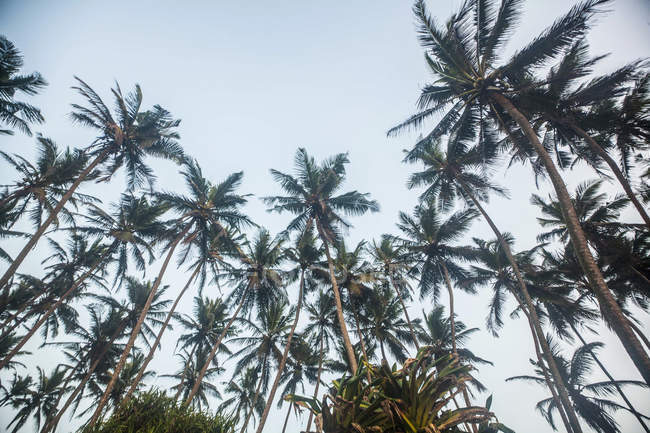 Palm trees and tranquil sky, low angle view — Stock Photo