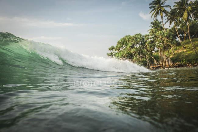 Мальовничий вид на море хвилі і пальмові дерева на узбережжі Індійського океану, Шрі-Ланка — стокове фото