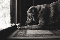 Симпатичная собака играет с мячом — стоковое фото