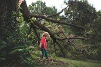 Adorable petit garçon près d'arbre — Photo de stock