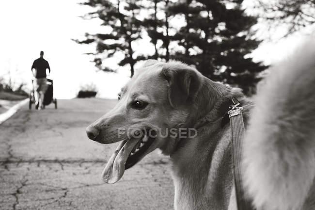 Милый смешной пес стоит на дороге — стоковое фото