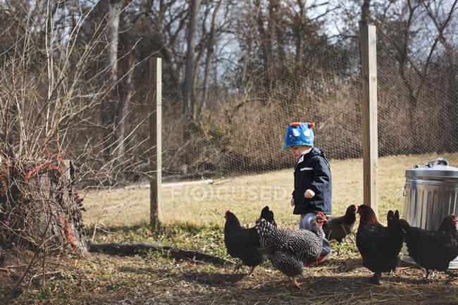 Beau petit garçon nourrissant les poules — Photo de stock