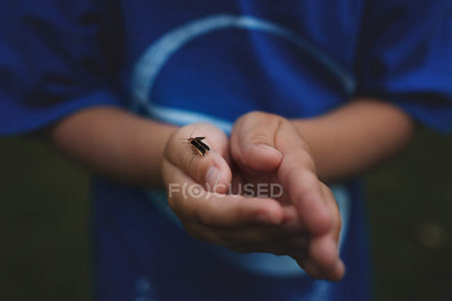 Hands of little boy with insect — Stock Photo