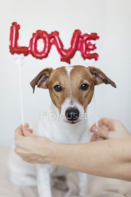 Young woman with dog with red balloons in form of word love, selective focus — Stock Photo