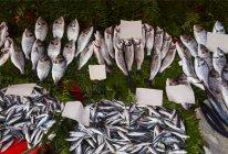 Рыбный рынок — стоковое фото