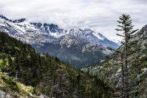 Сніг з запилених гір і вічнозелені дерева — стокове фото