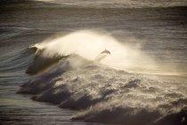 Delfine springen aus den Meereswellen — Stockfoto