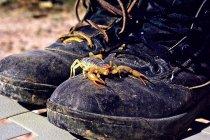 Scorpion d'escalade sur la paire de bottes — Photo de stock
