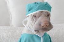 Shar Pei dog dressed as surgeon — Stock Photo