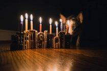 Hundesitting neben dekorativen Kerzen — Stockfoto