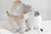 Shar Pei dog and cat — Stock Photo
