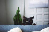 Кошка, выглядывающая через подлокотник дивана — стоковое фото