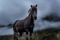 Black horse in field — Stock Photo