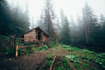 Hunting Cabin in woods — Stock Photo