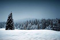 Jura National Park in winter — Stock Photo
