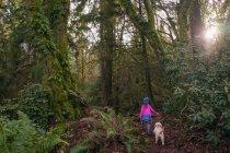Дівчина, що йде через ліс з собакою — стокове фото