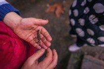 Junge halten kleine Eidechse — Stockfoto