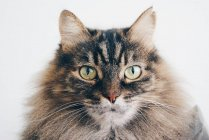 Portrait of tabby cat — Stock Photo
