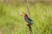 Птах лов риби — стокове фото