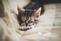 Chaton dort sur le lit — Photo de stock