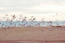 Möwen fliegen über den Strand — Stockfoto