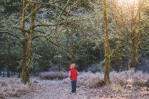 Ragazzo in piedi nella foresta — Foto stock