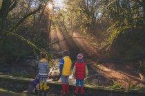 Tres niños y un perro en el bosque - foto de stock