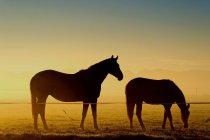 Две лошади в тумане — стоковое фото