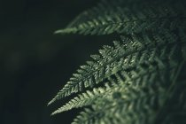 Зелений природних деталей завод візерунком — стокове фото