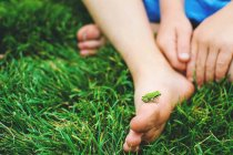 Small frog on child's foot — Stock Photo