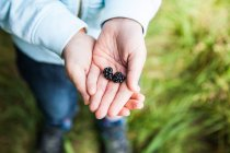 Child holding two blackberries in hands — Stock Photo