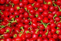 Червоний гострого перцю — стокове фото