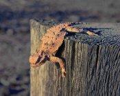 Lagarto, rastejando na pós de madeira — Fotografia de Stock