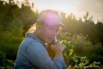 Frau, die Ernte von Gemüse — Stockfoto