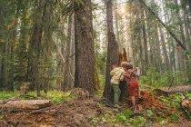 Dois meninos brincando na floresta — Fotografia de Stock