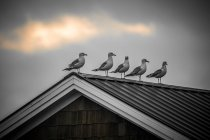 Seagulls perched on rooftop — Stock Photo