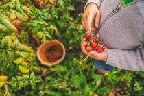 Мальчик комплектации rosehips — стоковое фото