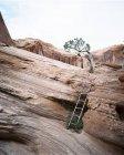 Ladder at Corona Arch — Stock Photo