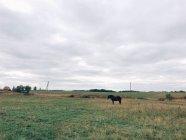 Cheval debout dans la prairie — Photo de stock