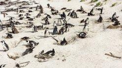 Colony of Penguins on beach — Stock Photo