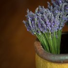 Lavenders in flower pot — Stock Photo