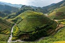 Reisfelder, Vietnam — Stockfoto