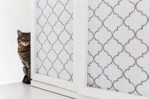 Katze schaut um die Ecke — Stockfoto