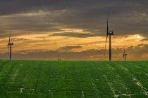 Green field with wind turbines — Stock Photo