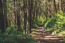 Menino caminhando pela trilha na floresta — Fotografia de Stock