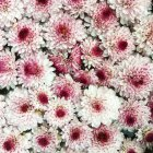 Primo piano dei fiori — Foto stock