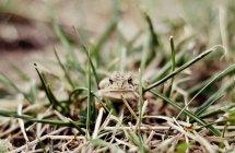 Sapo sentado na grama — Fotografia de Stock