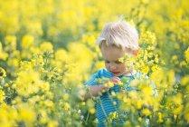 Menino de pé no campo de flores amarelas — Fotografia de Stock
