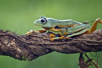 Frog sitting on branch — Stock Photo