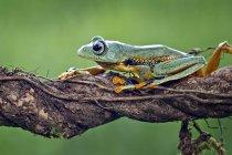 Grenouille assis sur une branche — Photo de stock